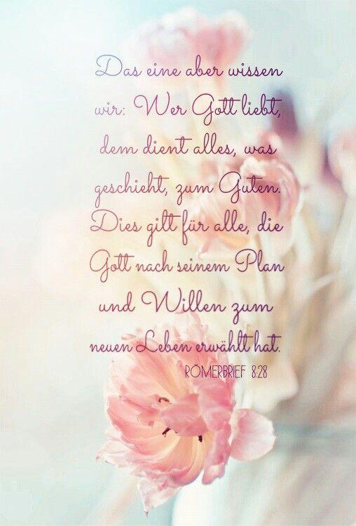 Römerbrief 8 : 28