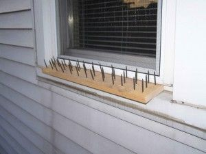 """#Prepper #Survival -   Simple """"Do it Yourself"""" Window Defense ... Against bears of course"""