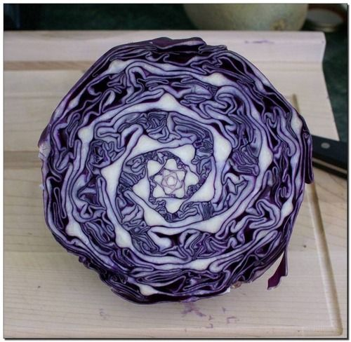Red cabbage, natural fractal triple spiral...fractals are everywhere...look for them.