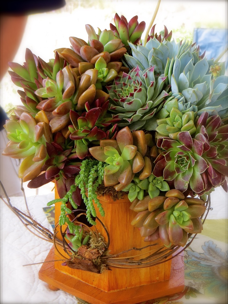 290 Best Images About Succulents On Pinterest Gardens