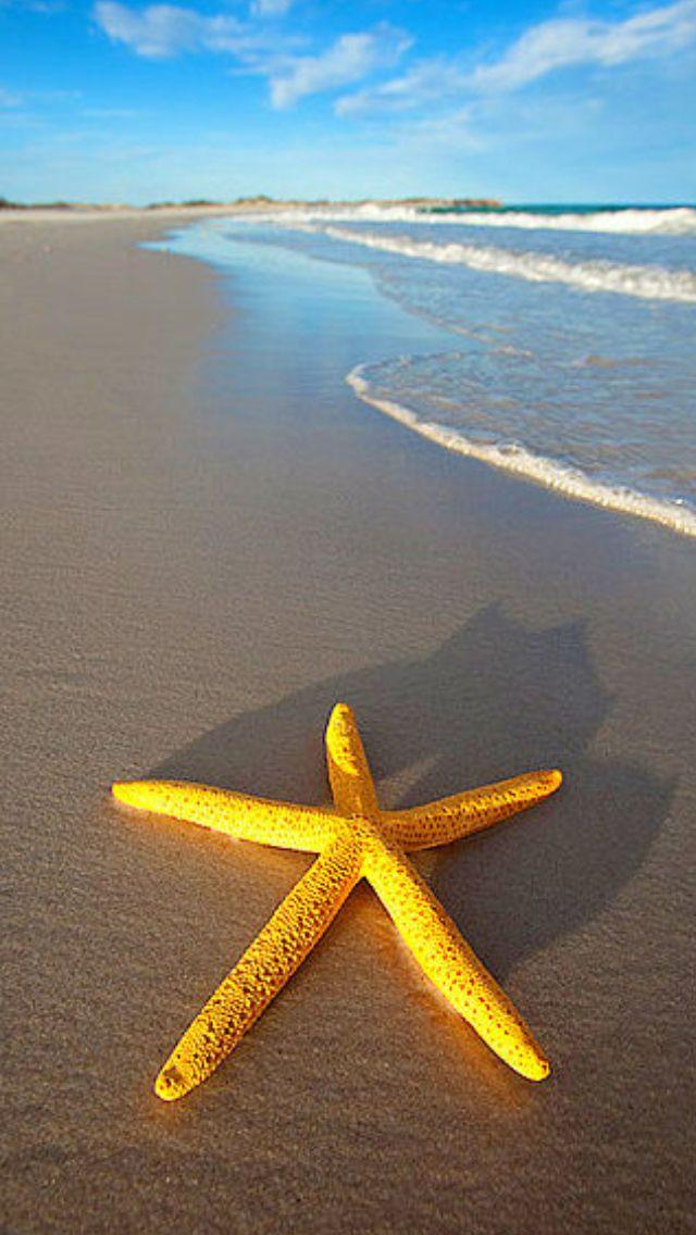 Starfish #ocean #yellow