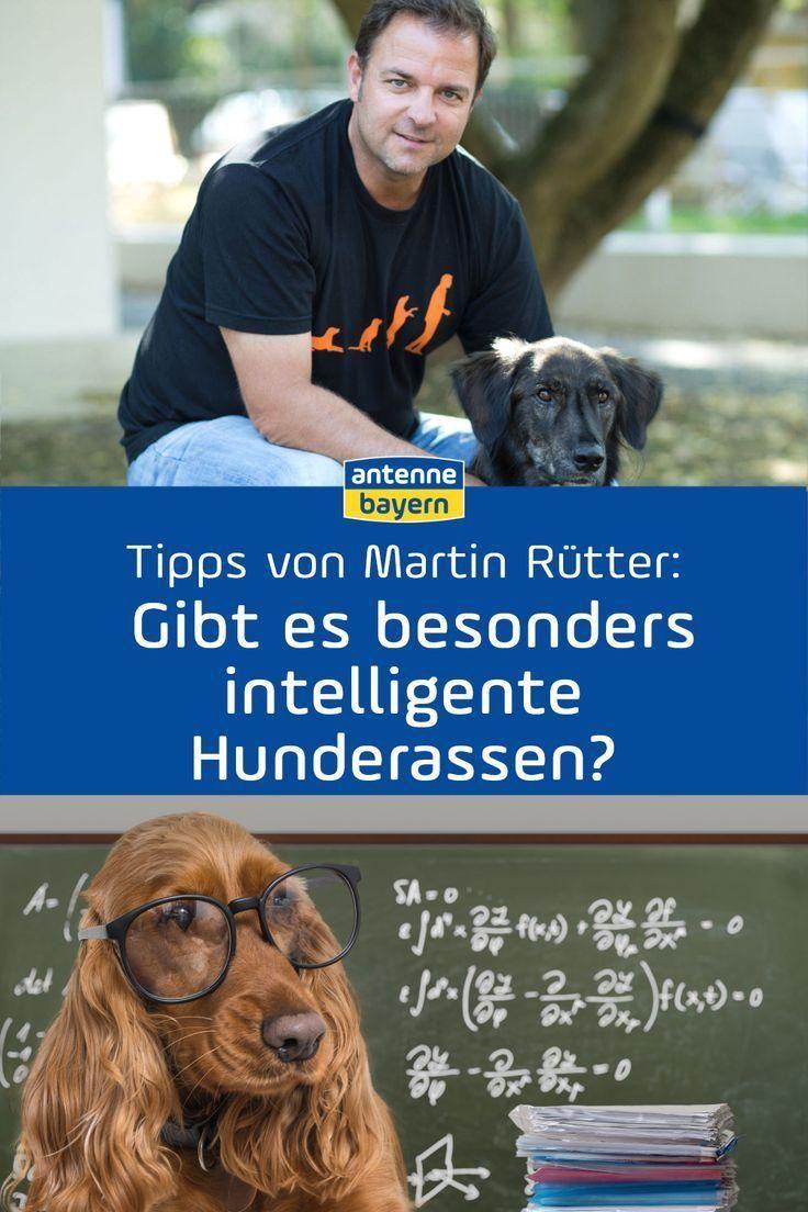 Martin Rutter Live Bei Antenne Bayern Die Antworten Zum Nachhoren Hundeprofi Martin Rutter Beantwortet Eure Fragen Rund Um In 2020 Hunde Antenne Bayern Hunderassen