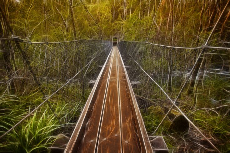 Suspension bridge in the Southwest Forest