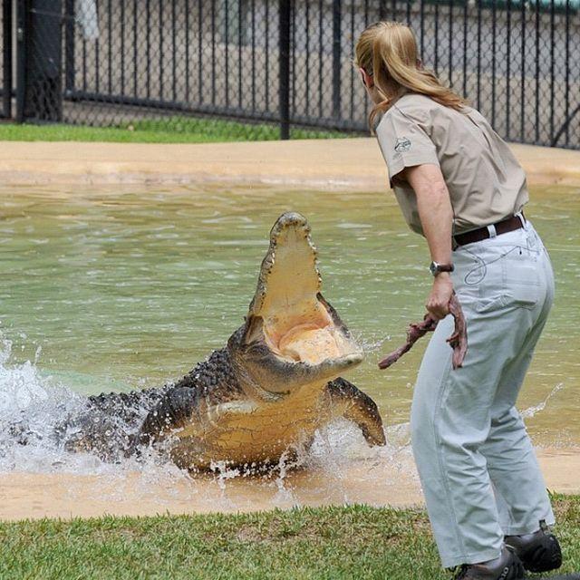 Дочь охотника на крокодилов — жизнь Бинди Ирвин