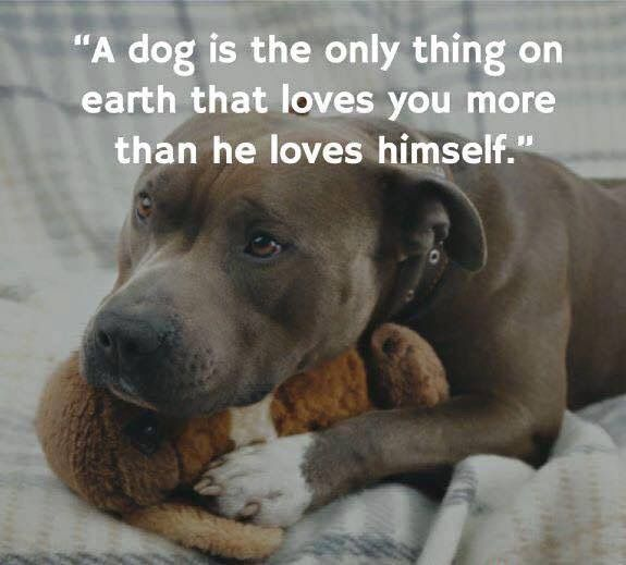 """Why not replace the word """"thing"""" withthe saying """"THE ONLY ONE""""_I am 100% sure that most people agree with me that a dog is NOT a thing !"""