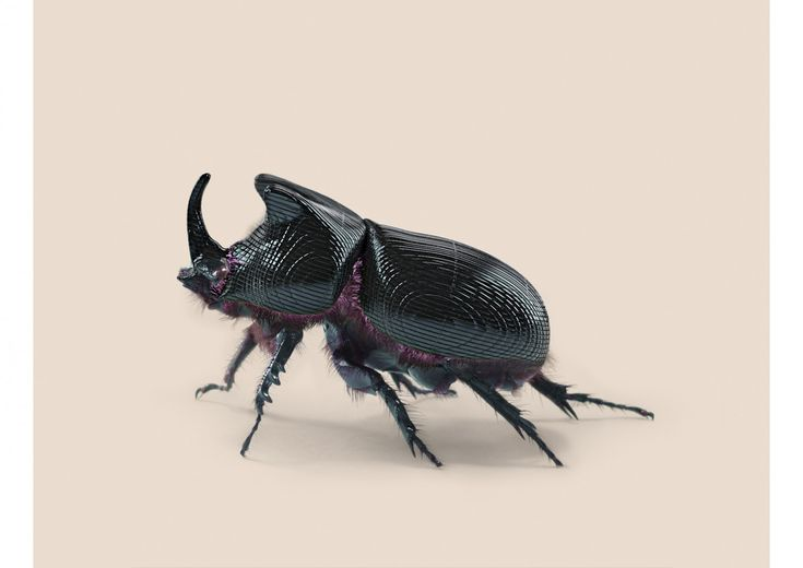 Vincent Fournier, Post Natural History, RHINO BEETLE [Oryctes transmissionis] Insect adapted to continuous tracking, 2012.