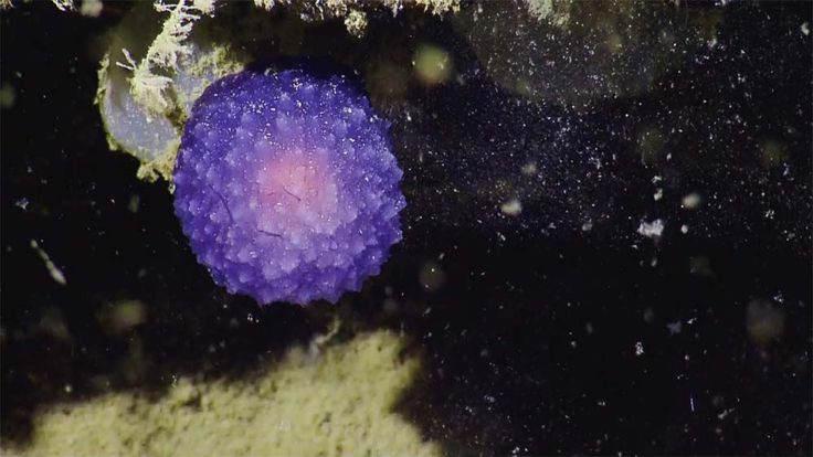 Check out these photos of a mysterious purple orb found during an exploration near the Channel Island National…