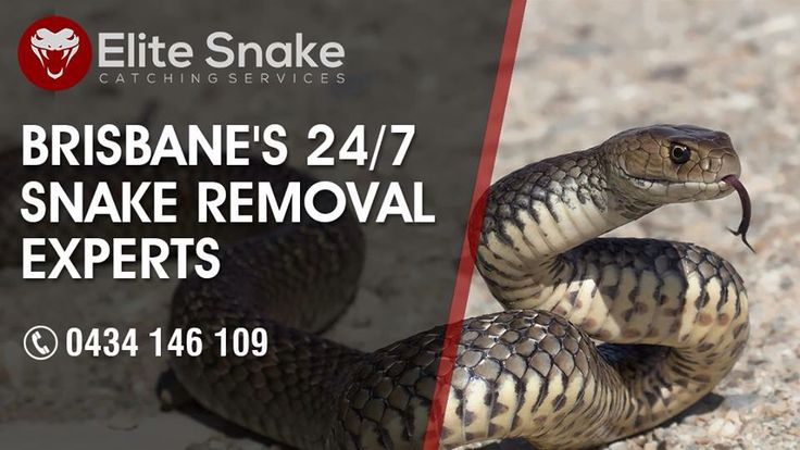 Hello everyone Snake season is approaching if you have unwanted visitors in your home or business and  need them removed for a small Fee. please Don't hesitate To call us   visit our website www.brisbane-snake-catcher.com.au