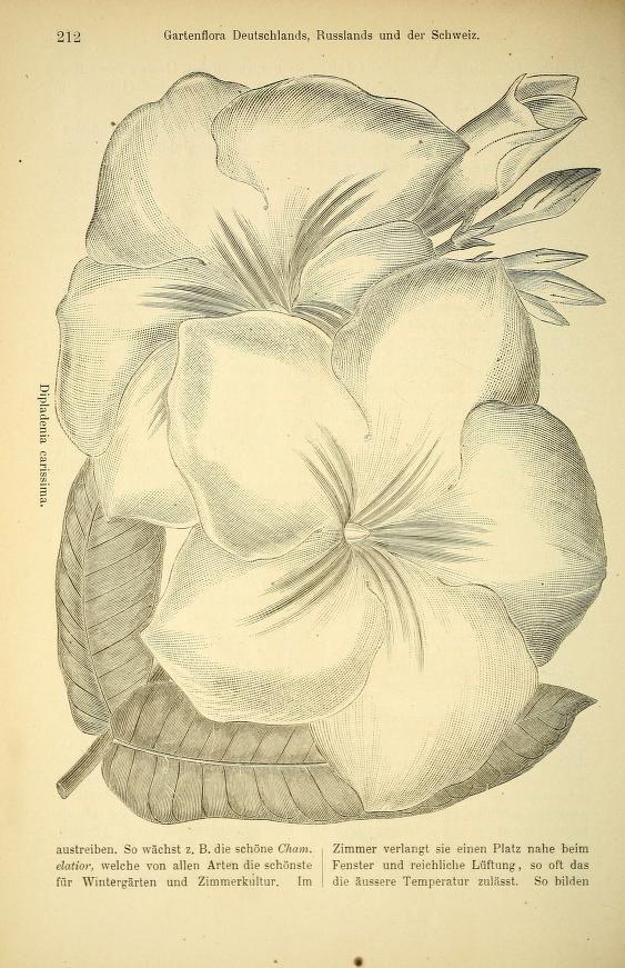 Trend  Gartenflora zeitschrift f r garten und blumenkunde Volume bd