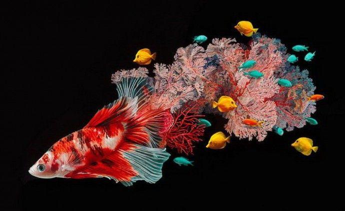 Красочные картины рыб от Лизы Эриксон