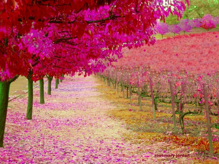 The Napa Valley wine country is beautiful. . . http://www.etsy.com/listing/87725824/the-orchard-moss-peach-joy-inspiration