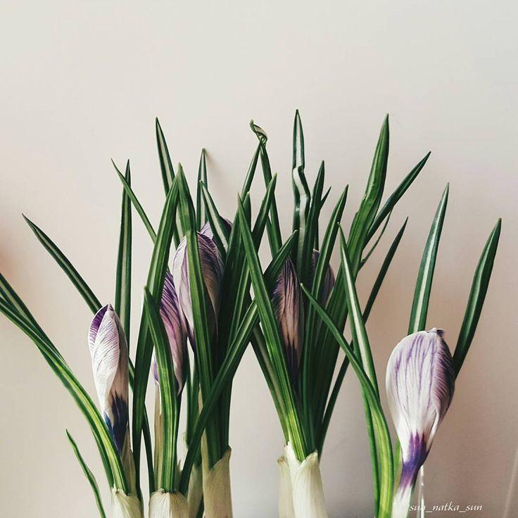 Доброе утро☕ С началом новой рабочей недели и пусть она пройдёт легко и быстро! Новая неделя - новые планы. А начинаем с самого приятного чашки кофе, чая или какао.   У меня в приоритете довязать бактус на весну, а то что-то я на нём застряла😡 А того и гляди шорты нужны будут😁  #доброеутро #весна #март #фотонателефон #вязание #Наткавяжет #крючком #вяжукрючком #бактускрючком #бактус #цветы #крокус #природа #красотавокругнас #Пушкино #Подмосковье #Московскаяобласть  #Natka_lifestyle…