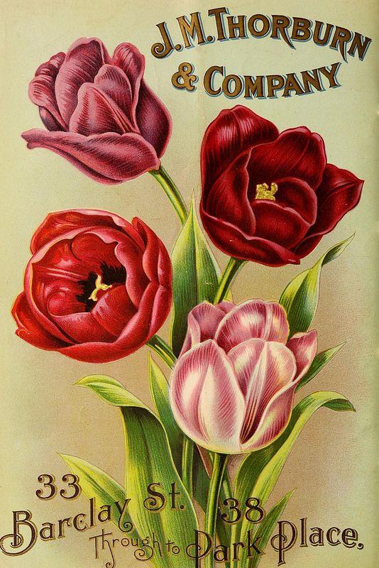 J.M. Thorburn & Co.'s annual descriptive catalogue of flower seeds :.  New York :J.M. Thorburn & Co..