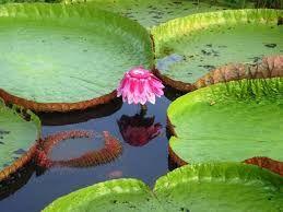 Resultado de imagem para plantas da flora da floresta amazonica