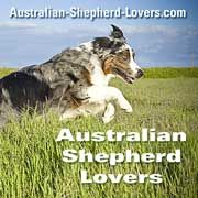 The Australian Shepherd is the star of this website. Lots of information, great resources and friendly community for Aussie owners.