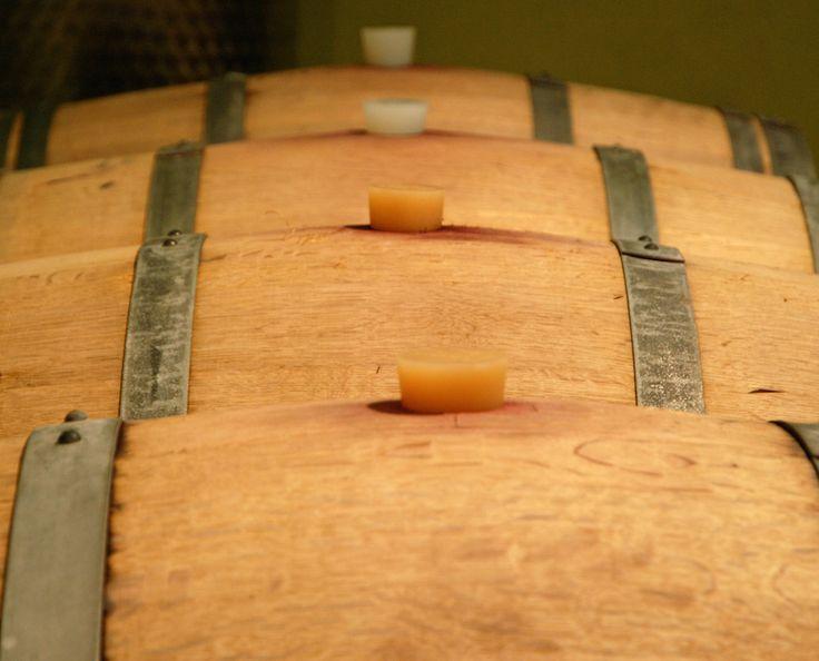 Colline di Sopra - Wine Tasting