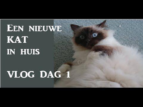 KATTEN   Nieuwe kat in huis VLOG DAG 1