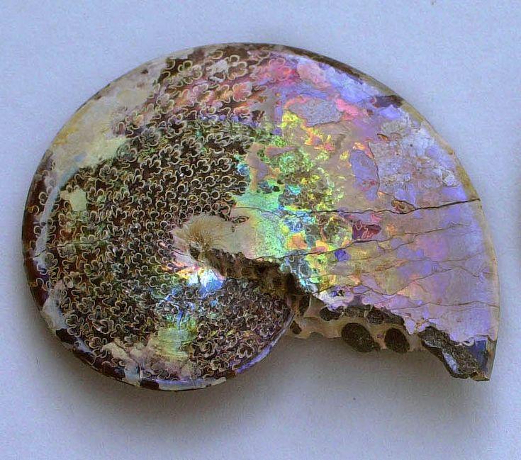 Opalized ammonite fossil, Late Cretaceous Period (Source: stargods)