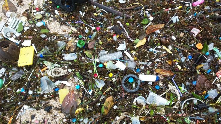 Humans Ingesting Plastic from Ocean Pollution. The earth's oceans will have more plastic than fish by 2050, and fish with plastic in their systems are at increased risk of cancer and other health problems for people.