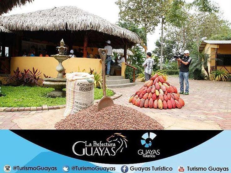 """""""Hacienda cañas en #Naranjal , por cortos senderos el turista se interna en las plantaciones de cacao y banano, donde se le explica la historia y los…"""""""