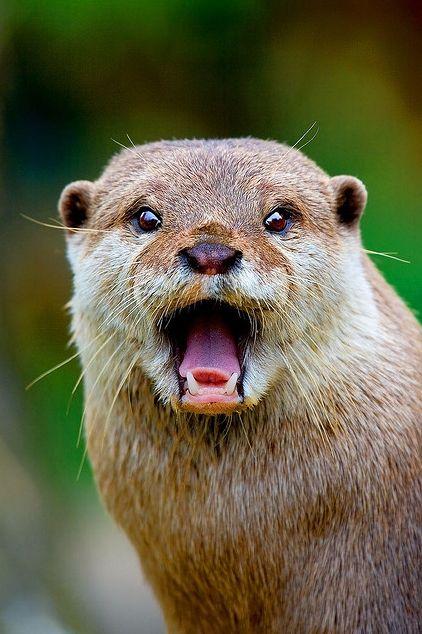 """""""Me dejas con la boca abierta"""" #Animals #Nutria"""