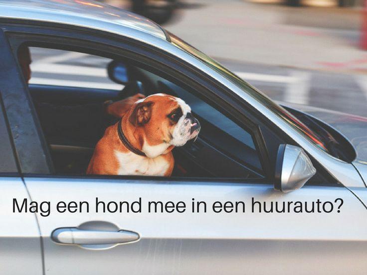 Mag een hond kosteloos mee in een huurauto? Ontdek hoe het zit op het blog van Sunny Cars. #roadtriptip #huurautotip #sunnycars