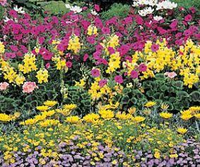 Idées de parterre de fleurs