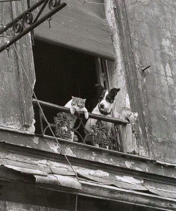 Pispiando en la ventana, París, por Annick Gérardin
