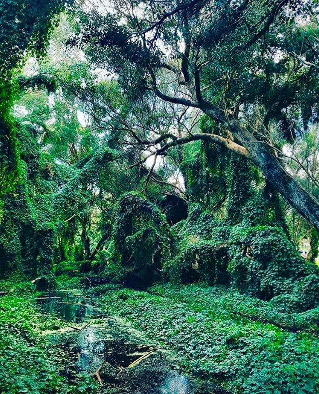 The Secret Garden in Gwelup @perthisok