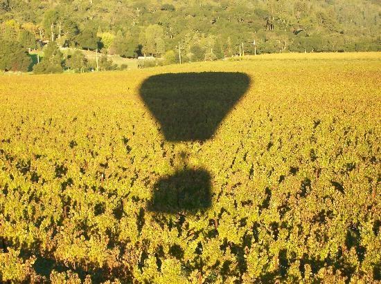 気球で楽しむナパバレーのぶどう畑 「死ぬまでに見ておきたい、空からの絶景 15」 トリップアドバイザー