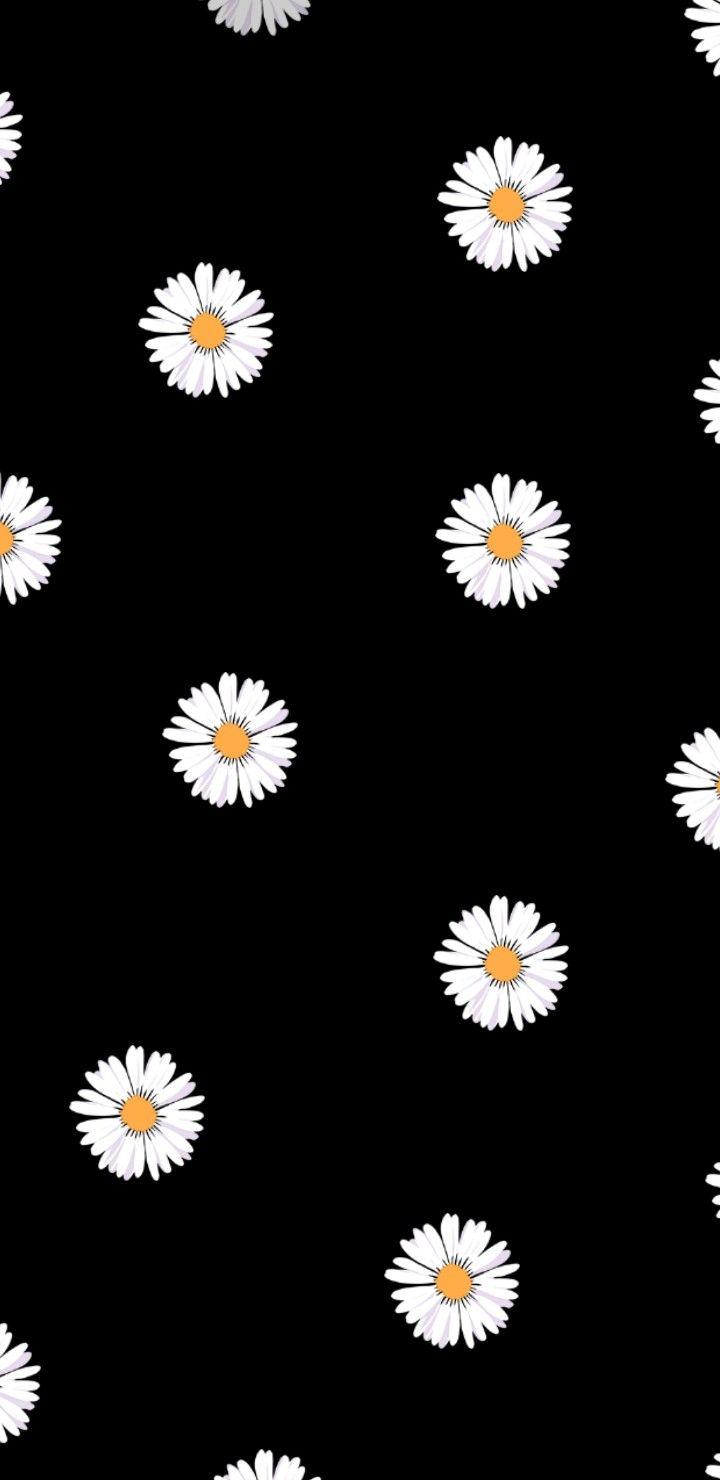 Pin Oleh Magdalena Klaun Di Tumblr Like   Bunga Daisy, Foto Abstrak, Foto  Nasa