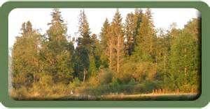 Nipawin, Saskatchewan - Bing Images