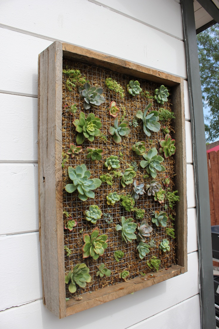 Succulent Boxes by Leaf it to Lexi in Oceanside, CA. Completes the front area of my apartment and so easy to take care of!