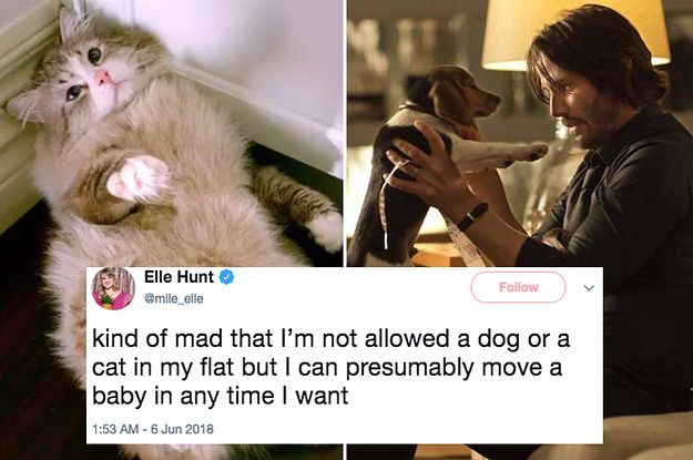19 Jokes That Will Only Make Sense To You If You Consider Your Pet