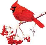 A red cardinal tattoo. My grandmother used o tell me about the native legend tag then a red cardinal appeared, it was an ancestor visiting you when you needed help or guidance.