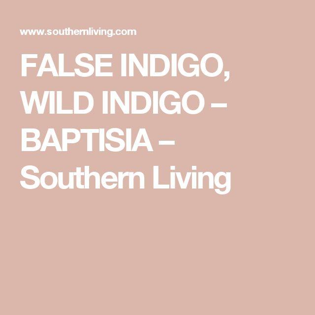 FALSE INDIGO, WILD INDIGO – BAPTISIA – Southern Living