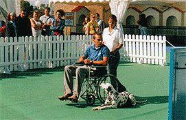 Qué son los Perros de Asistencia y los Perros de Terapia – LealCan Adiestramiento de perros