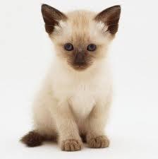 gatitos bebes - Buscar con Google