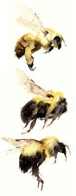 three bumbles - Kate Osborne