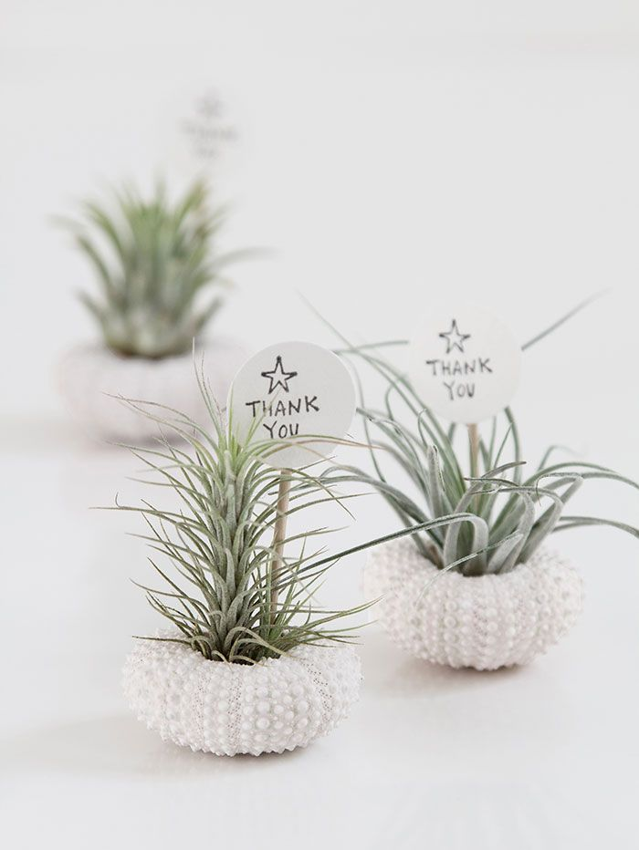 wedding favors ideas do it yourself%0A Air Plant Wedding Favours