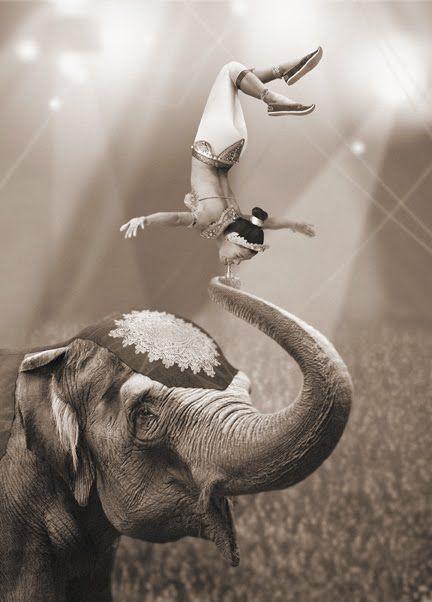 Fairground via circusmassimo:    A fearless acrobat balances by her teeth on an elephant's trunk.