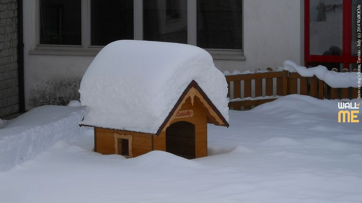 2014, week 50. Snow on dog's home, Tarvisio - Italy. Picture taken: 2010, 12