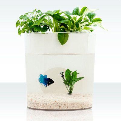 A dialogue between flowers and fish aquarium planter fish for Betta fish aquaponics