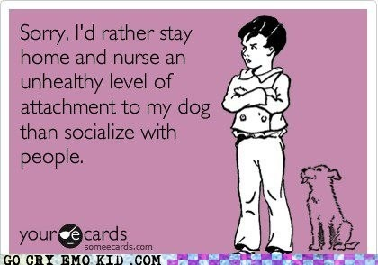 hahaha: Cat, Dogs Lol, Amazing Dogs, Absolutely, My Husband, My Life, Sometimes Ok, So Funny, Totally Me