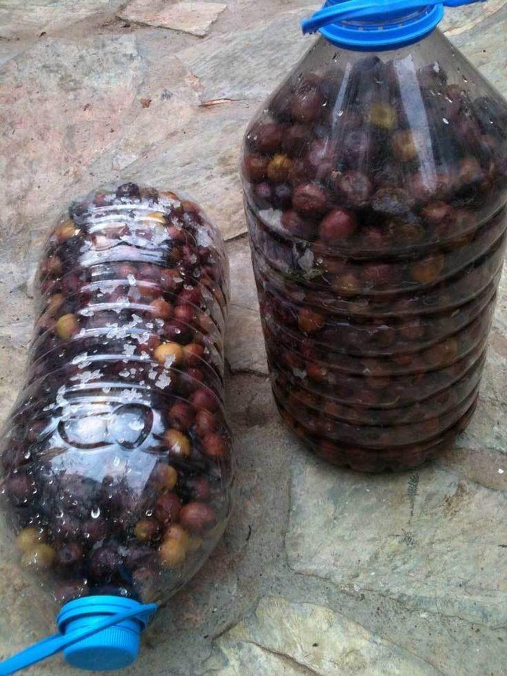 Günümüzde taze zeytin çoğu semt pazarında ve hatta çoğu büyük marketlerde satılıyor. Ağaçtan topladığınız, yahut satın aldığınız taze zeytinlerle gönül rahatlığıyla yiyebileceğiniz, katkı maddesi kullanılmamış, temiz, sağlıklı zeytinler kurabilirsiniz. K...