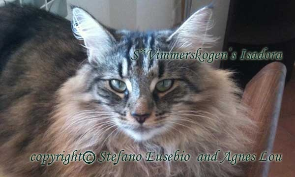 My foundation female (Dragons Wood) S*Vimmerskogen's Isadora HCM 1st scann negative
