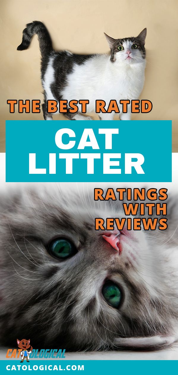The Best Cat Litter, By Category Reviews and Ratings for