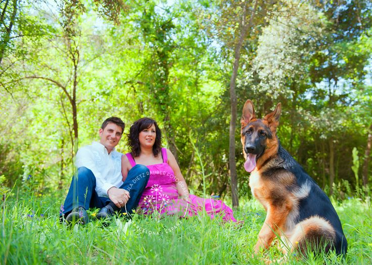 maternity session with lovely dog