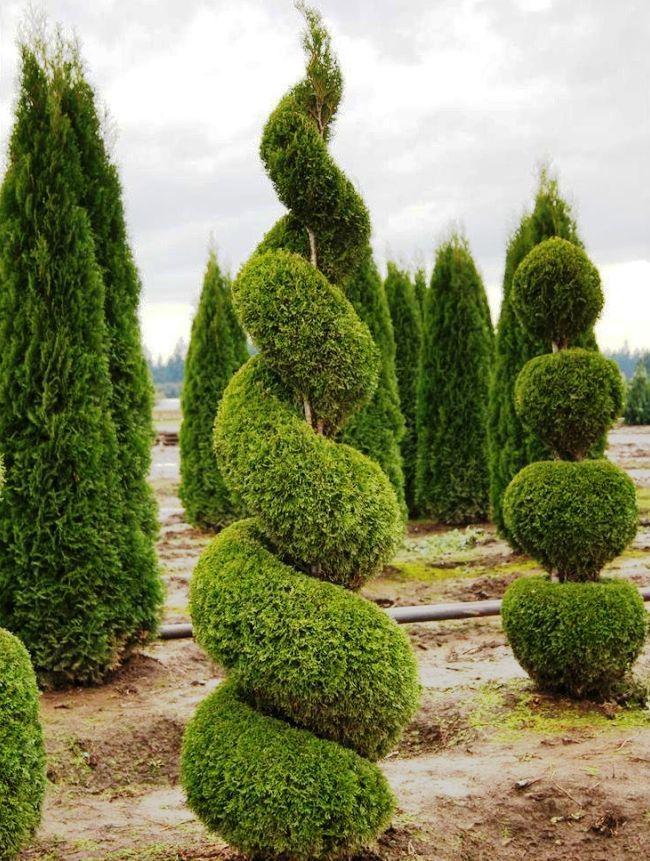 338 best Garten images on Pinterest Beautiful flowers, Bulbs and - gartenpflanzen winterhart immergrun