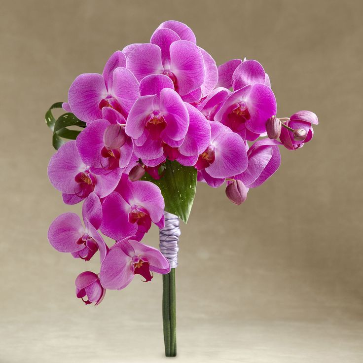 Distinctive Glorious Garden Silk Flower Centerpiece At Petals: 16 Best Images About Orchids On Pinterest